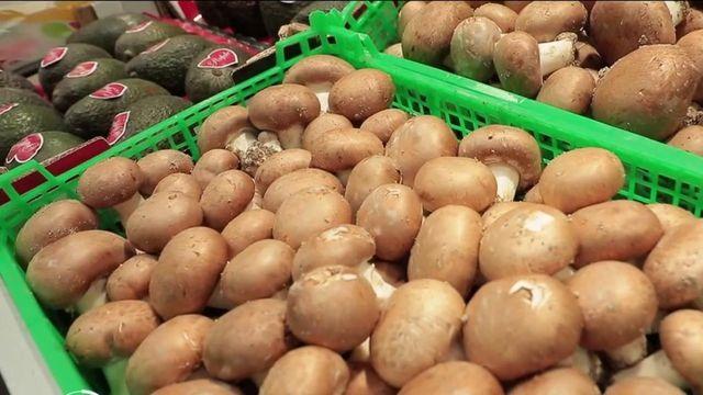Patrimoine : à la découverte des sous-sols où sont cultivés les champignons de Paris