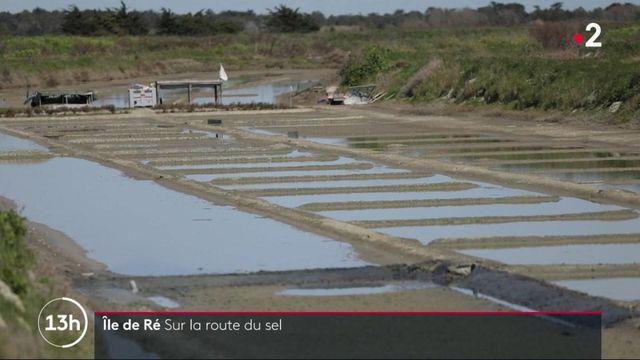 Île de Ré : les secrets de la route du sel