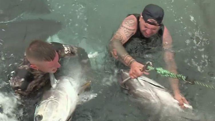 Sardaigne : la tradition de la pêche au thon perdure (FRANCE 2)