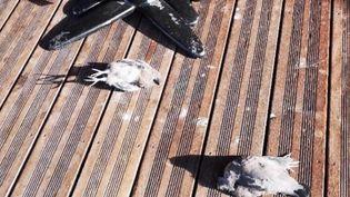 Des photos d'oiseaux morts ont circulé sur les réseaux sociaux après l'incendie de l'usine classée Seveso à Rouen jeudi 26 septembre. (FRANCEINFO)