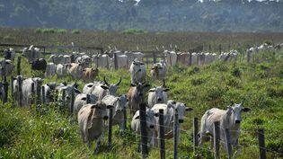 Un élevage bovin près de la forêt amazonienne au Brésil, en septembre 2019. (NELSON ALMEIDA / AFP)