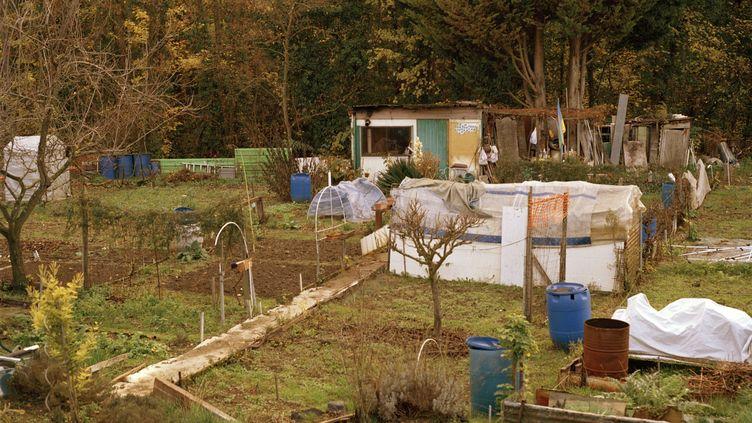 Les jardins ouvriers menacés à Aubervilliers par la construction d'une piscine. (BASILE BERTRAND)