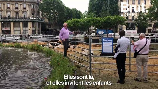 L'artiste Gad Weil a transformé la Place de la République à Paris en ferme géante. Son but : reconnecter les citadins à la nature.
