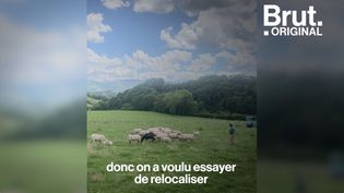 VIDEO. Au Pays Basque, ils relancent la filière de laine de mouton (BRUT)