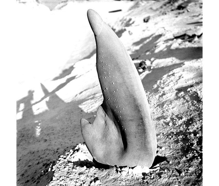 """Charlotte Perriand, """"Grès de la carrière de Bourron,forêt de Fontainebleau"""", vers 1935 (© Adagp, Paris, 2019 © AChP)"""
