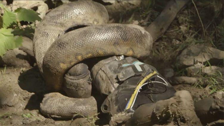 """(Paul Rosolie n'a finalement pas été """"avalé vivant"""" par un anconda © Capture d'écran/Discovery Channel)"""