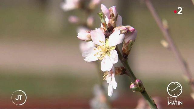 Santé: alerte aux pollens et aux allergies
