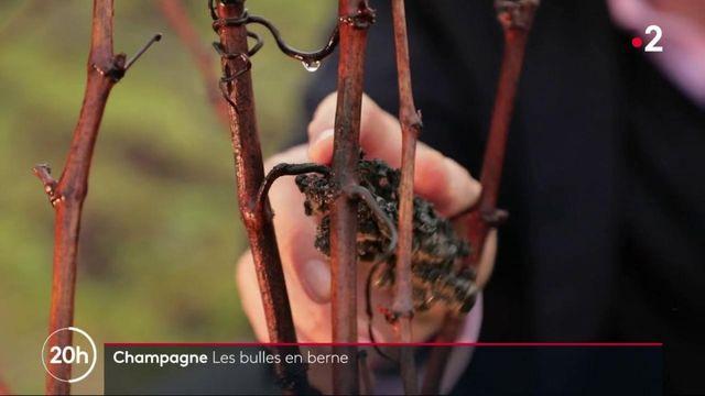 Champagne : les propriétaires de maisons de champagne durement touchés par la crise sanitaire