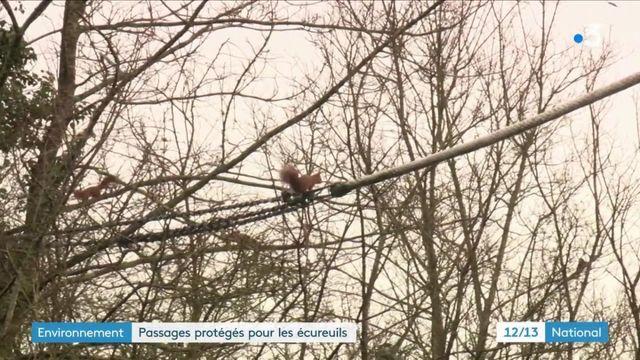 Environnement : dans l'Oise, un passage protégé pour les écureuils