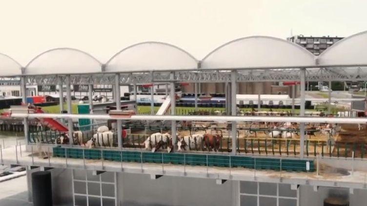 Admirer des vaches sur une plateforme au beau milieu du port de Rotterdam (Pays-Bas). Une chose désormais possible depuis la création de la première ferme laitière flottantequi accueilleune trentaine de bêtes. (FRANCE 2)