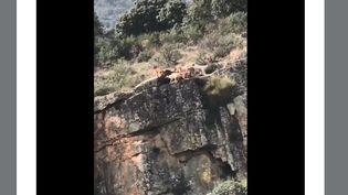 Capture d'écran d'une vidéo postée sur Twitter en Espagne, samedi 17 novembre, montrantune partie de chasse qui termine mal. (LUIS DOMINGUEZ / TWITTER)