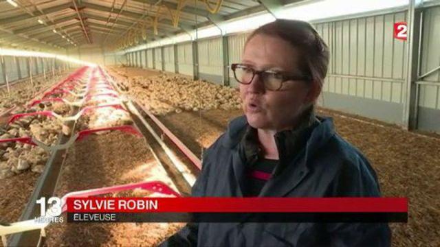 Grippe aviaire : à qui la faute ?