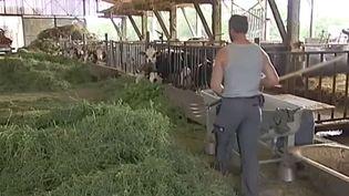 Frédéric Tritsch, éleveur à L'Ill (Haut-Rhin) a choisi de miser sur la vente directe de sa production de viande aux consommateurs. ( FRANCE 2)