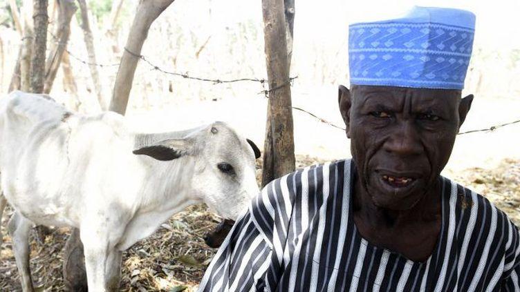 Dans l'Etat de Benue, au centre-nord du Nigeria, les bergers nomades ont été chassés en raison d'une nouvelle loi interdisant l'élevage migrateur, une pratique séculaire nécessaire à la survie du bétail. (PIUS UTOMI EKPEI / AFP)