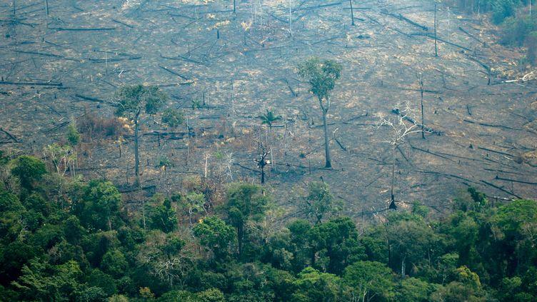 Vue aérienne de la forêt amazonienne déboisée et brûlée, le 24 août 2019. (LULA SAMPAIO / AFP)