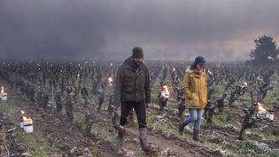 Des vignerons en train d'installerdes bougies pour protéger leur exploitation du gel. (SEBASTIEN SALOM-GOMIS / AFP)