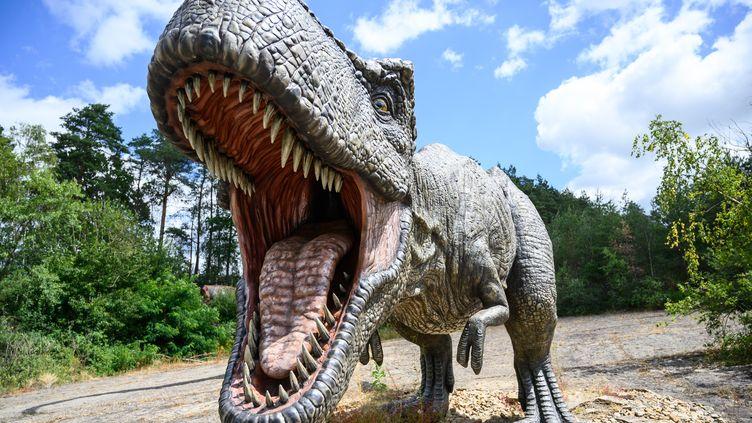 Un modèle de tyrannosaurelors d'une exposition en Allemagne, le 2 juillet 2019. (CHRISTOPHE GATEAU / DPA / AFP)