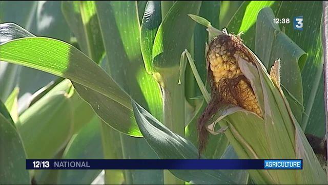 Dordogne : la sécheresse exceptionnelle inquiète les agriculteurs