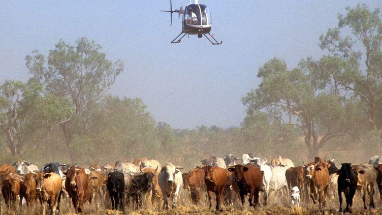 Les investisseurs chinois s'intéressent aux terres agricoles et aux ranchs australiens. (AFP/ Guido Alberto Rossi )