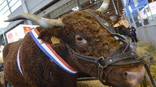 Une vache installée au Salon de l'agriculture, à la porte de Versailles, à Paris, le 26 février 2015. (MIGUEL MEDINA / AFP)