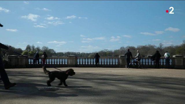 Animaux : des Britanniques qui ont du chien