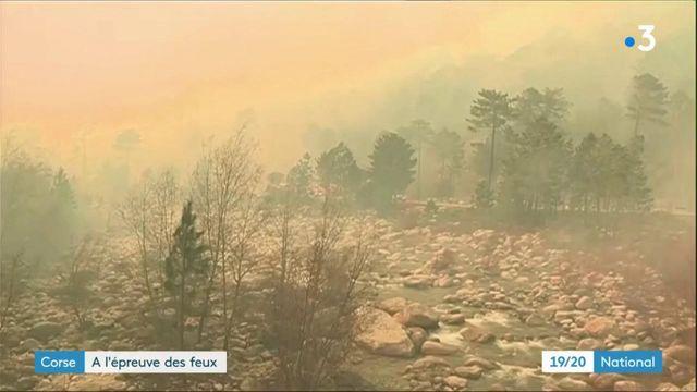 Corse : l'Île de Beauté à l'épreuve des feux