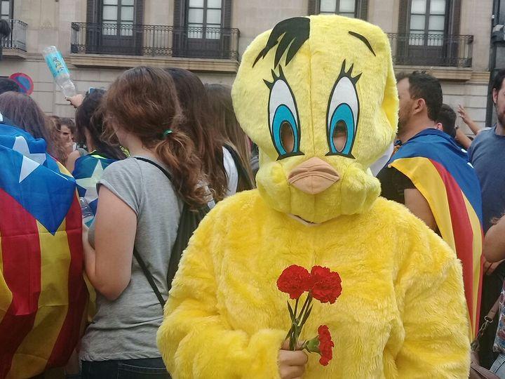"""Une manifestante déguisée en """"Piolin"""", le nom espagnol du canari de """"Titi et Grosminet"""",desœillets à la main, à Barcelone (Espagne), le 3 octobre 2017. (RAPHAEL GODET / FRANCEINFO)"""