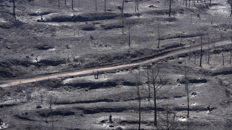 Des arbres brûlés après l'incendie qui a ravagé le massif de Troodos à Chypre, le 4 juillet 2021. (PETROS KARADJIAS / AP)
