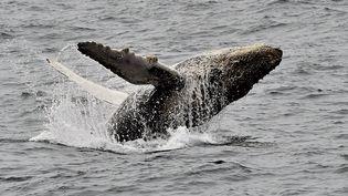 Le bateau emmenait 27 personnes à son bord pour observer des baleines au large du Canada. (RODRIGO BUENDIA / AFP)