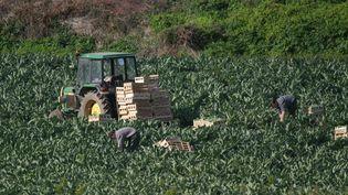 Des agriculteurs travaillant sur l'île de Batz, en Bretagne, en mars 2017. (PHOTO12 / GILLES TARGAT / AFP)