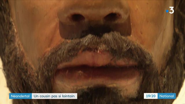 Histoire : l'homme de Néandertal au musée de l'Homme