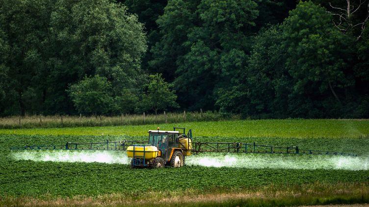 Un tracteur pulvérise des pesticides dans un champ à Bailleul (Nord), le 14 juin 2015. (PHILIPPE HUGUEN / AFP)