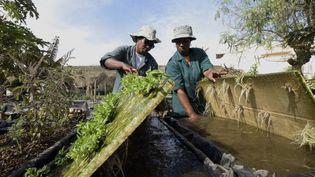 Deux femmes travaillent sur leur projet de micro-jardinage à Dakar. (SEYLLOU/AFP)