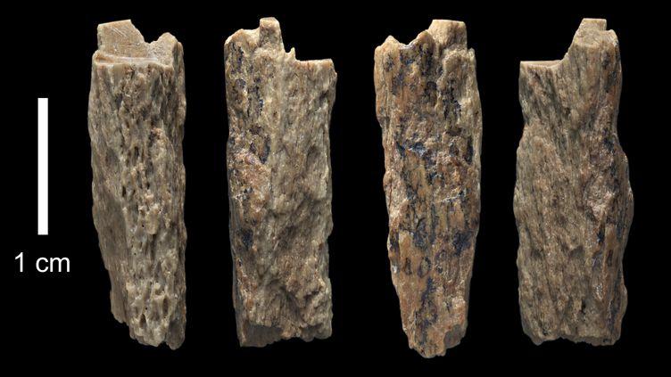 Le fragment d'os appartenant à l'adolescente issue du croisement entre une Néandertalienne et un Dénisovien,découvert en 2012 dans une grotte des montagnes de l'Altaï en Sibérie. (IAN CARTWRIGHT / UNIVERSITY OF OXFORD/MAX PLANCK / AFP)
