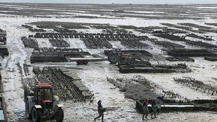 Les parcs à huîtres situés près des côtes sont la cible de vols réguliers. (FRANCOIS DESTOC / MAXPPP)
