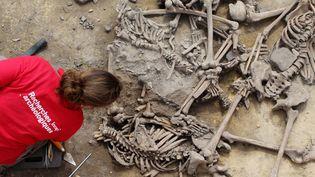 Une chercheuse de l'Inrap étudie des squelettes mis au jour à Achenheim, dans le Bas-Rhin (7 juin 2016)  (Philippe Lefranc / INRAP / AFP)