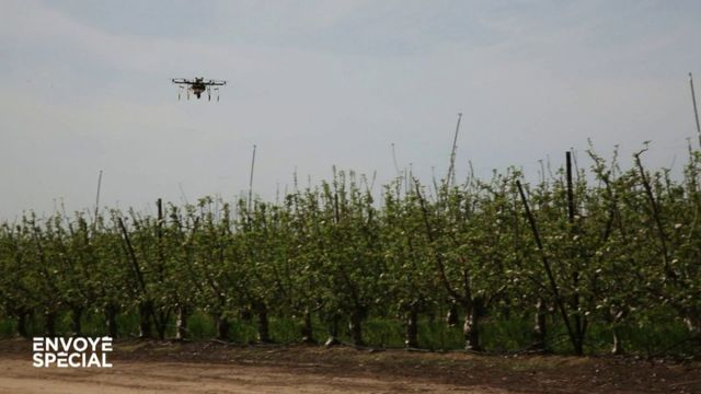 Envoyé spécial. Des drones pollinisateurs pour remplacer les abeilles