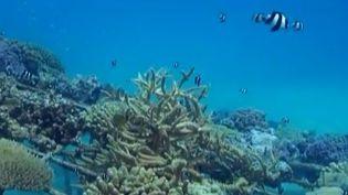 Le corail du lagon de Bora Bora, victime des changements climatiques. ( FRANCE 2 / FRANCETV INFO)