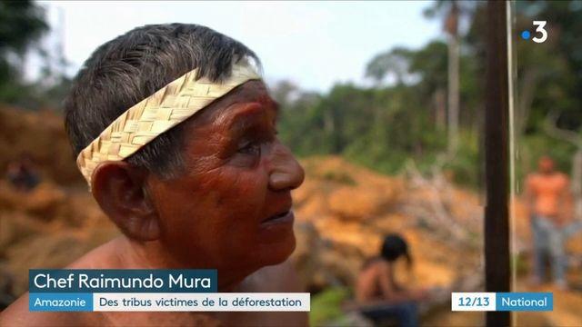 Amazonie : des tribus victimes de la déforestation