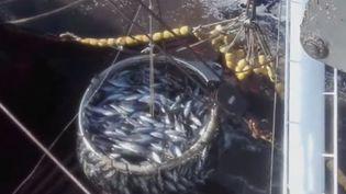 Le système DCP, dont les pêcheurs français abusent dans l'océan Indien, met en danger la survie des thons et d'autres poissons ou espèces marines. (FRANCE 2)