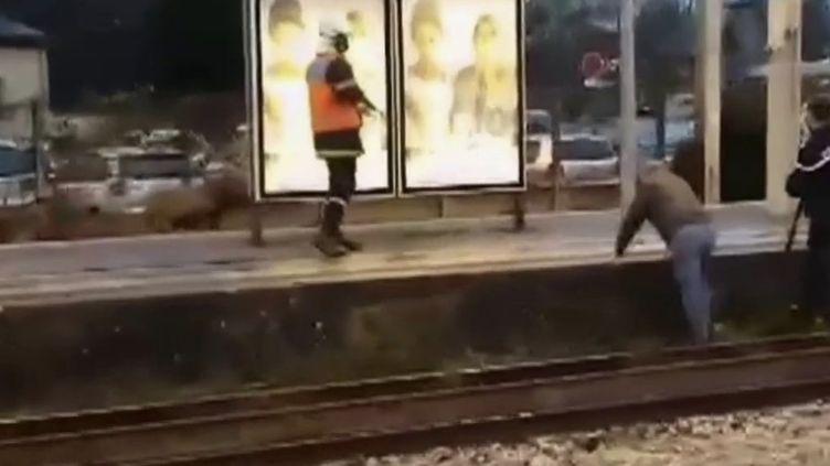 Capture d'écran cerf sur les rails à Chantilly (FRANCE 2)