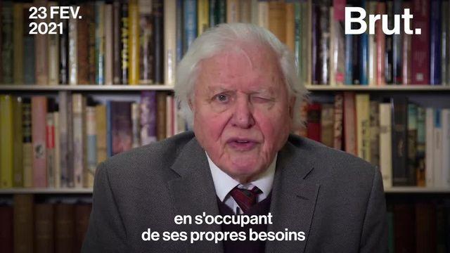 Le naturaliste britannique David Attenborough, 94 ans, a pris la parole mardi 23 février lors d'un sommet virtuel de dirigeants réunis au Conseil de sécurité de l'ONU.