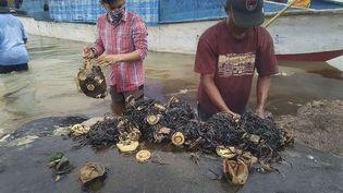Des experts analysent l'estomac d'une baleine échouéesur les rivagesdu parc nationalWakatobi, en Indonésie. (MUHAMMAD IRPAN SEJATI TA / AP / SIPA)