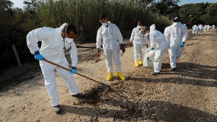 Les employés de la ville d'Hyères nettoient les plages polluées par des boulettes d'hydrocarbures. (LAURENT MARTINAT / MAXPPP)