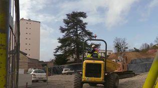 Partout en France, des arrachages d'arbres suscitent le débat. Au Mans, dans la Sarthe, des habitants se mobilisent pour préserver leur patrimoine écologique. (France 2)