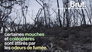 VIDEO. Comment une forêt se régénère-t-elle après un incendie ? (BRUT)