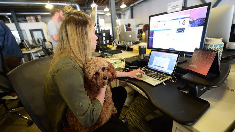 Aux Etats-Unis, une entreprise sur cinq autorise ses salariés à venir au bureau avec leur chien (photo d'illustration) (FREDERIC J. BROWN / AFP)