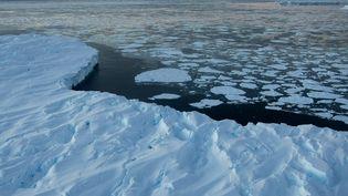 L'Antarctique, aujourd'hui glacé, était couvert d'une forêt quasi-tropicaleà l'époque de l'Eocène, il y a entre 34 et 56 millions d'années. (TORSTEN BLACKWOOD / AFP)