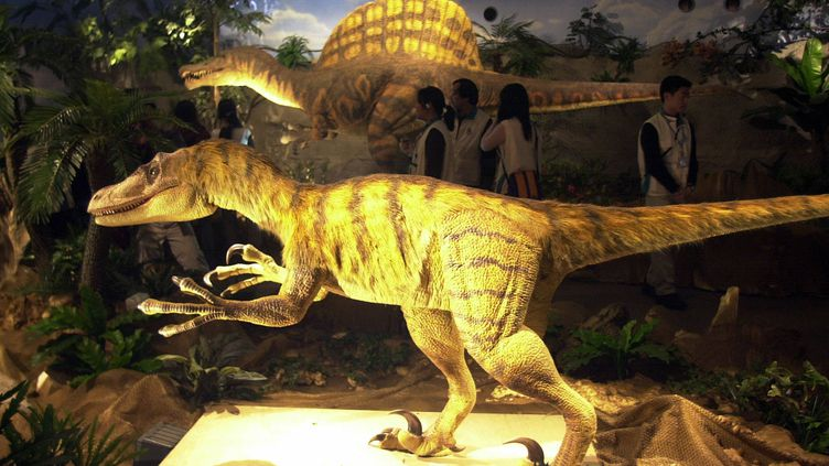Une réplique devélociraptor, au musée de Taipei (Taïwan), le 21 janvier 2005. (PATRICK LIN / AFP)