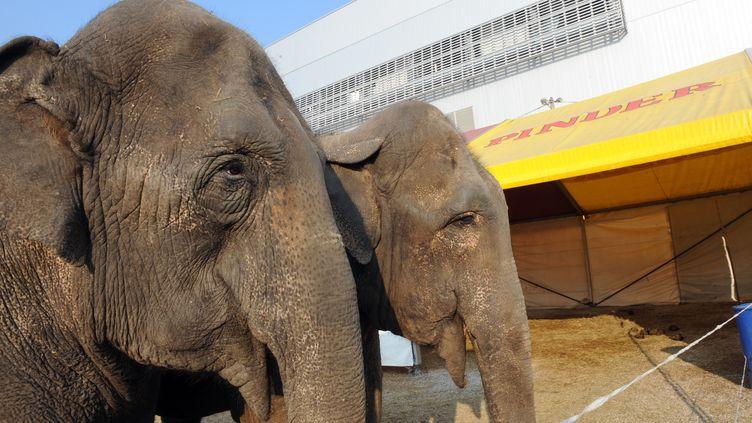 Deux éléphantes mascottes du cirque Pinder, le 12 mars 2010, dans leur enclos à Marseille (Bouches-du-Rhône). Photo d'illustration (PATRICK VALASSERIS / AFP)